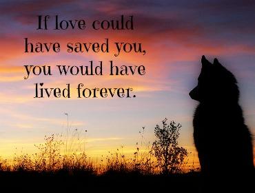 Remembering Dog Pet Memorials